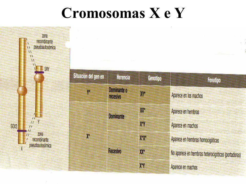 Cromosomas X e Y