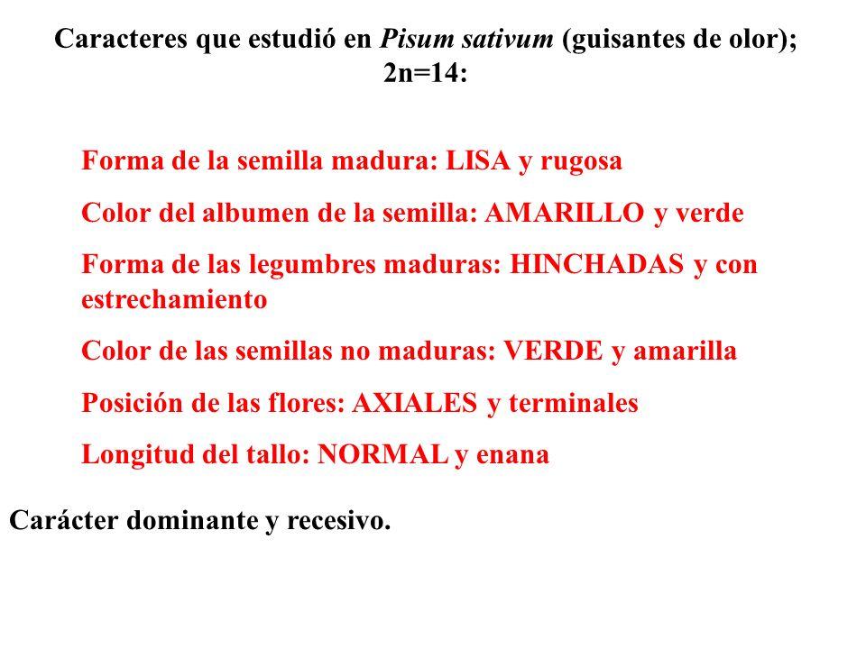 Caracteres que estudió en Pisum sativum (guisantes de olor); 2n=14: