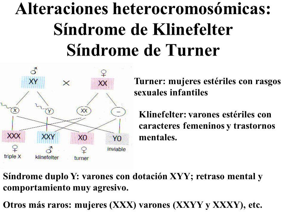 Alteraciones heterocromosómicas: Síndrome de Klinefelter Síndrome de Turner