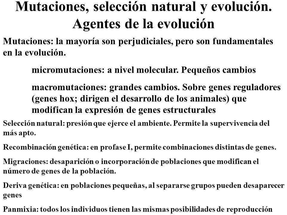 Mutaciones, selección natural y evolución. Agentes de la evolución