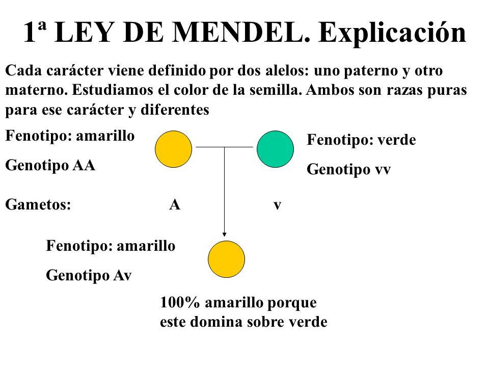1ª LEY DE MENDEL. Explicación