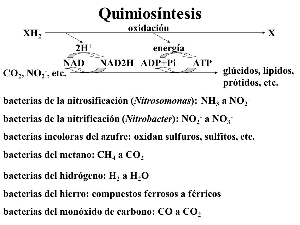 Quimiosíntesis XH2 X oxidación 2H+ energía CO2, NO2-, etc.