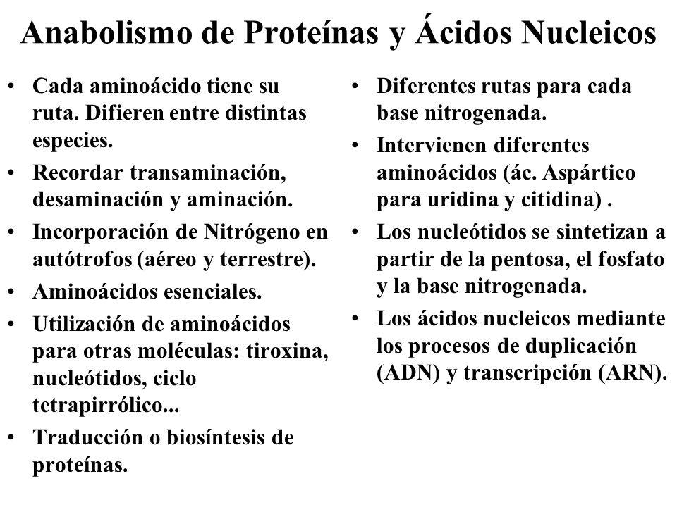 Anabolismo de Proteínas y Ácidos Nucleicos