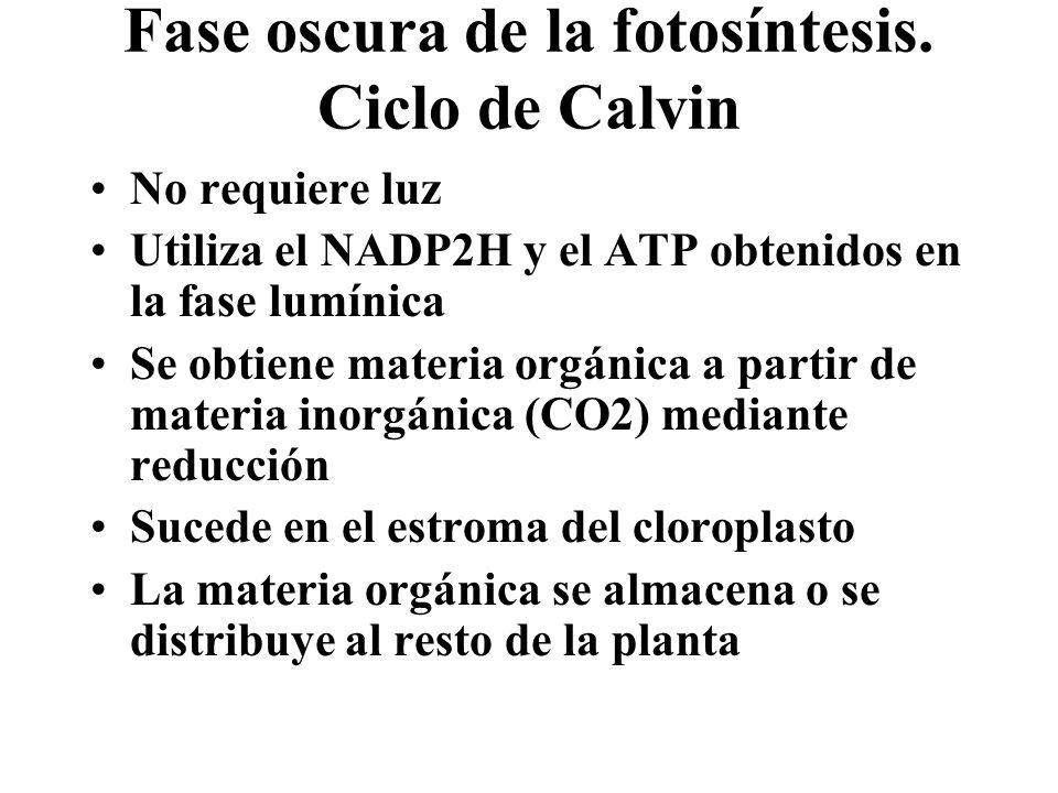 Fase oscura de la fotosíntesis. Ciclo de Calvin