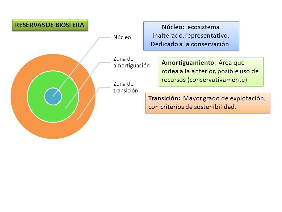 NúcleoZona de amortiguación. Zona de transición. RESERVAS DE BIOSFERA. Núcleo: ecosistema inalterado, representativo. Dedicado a la conservación.