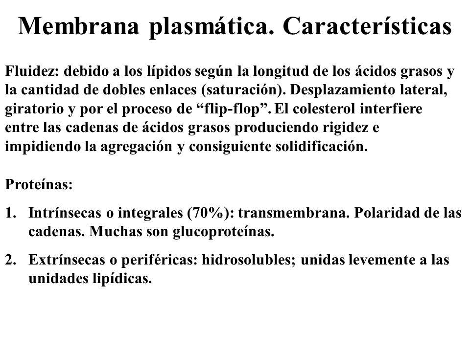 Membrana plasmática. Características
