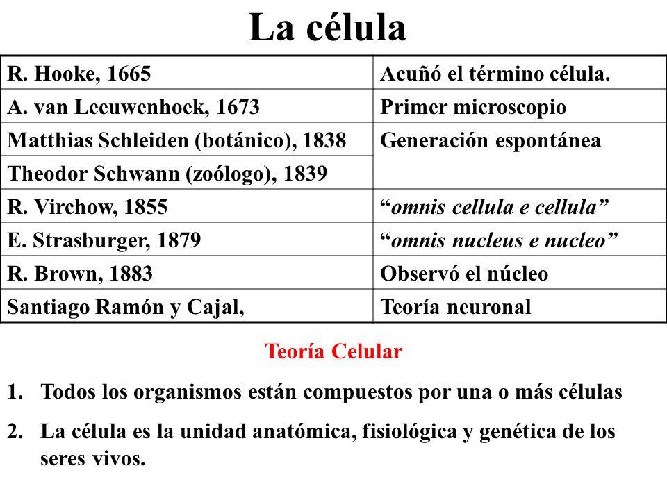 La célula R. Hooke, 1665 Acuñó el término célula.