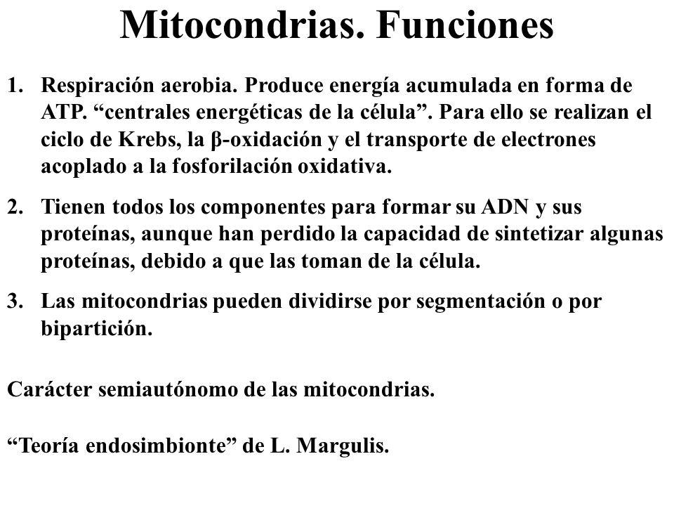 Mitocondrias. Funciones