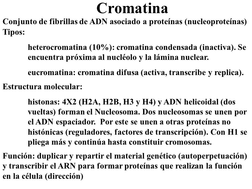 Cromatina Conjunto de fibrillas de ADN asociado a proteínas (nucleoproteínas) Tipos: