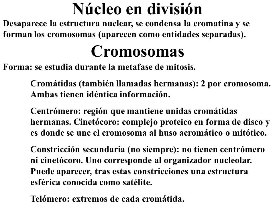 Núcleo en división Cromosomas