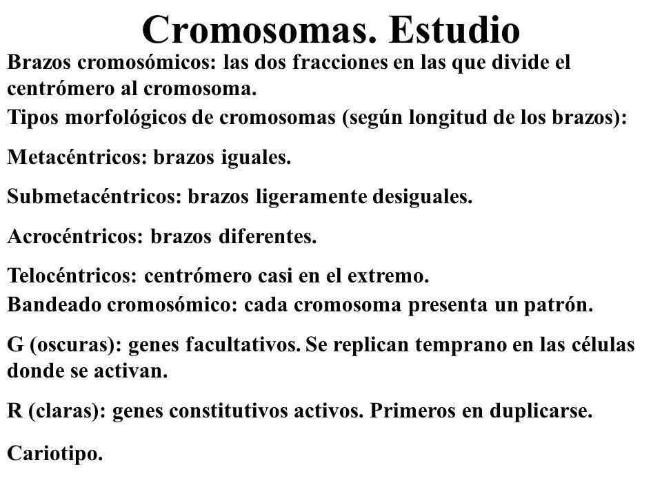 Cromosomas. Estudio Tipos morfológicos de cromosomas (según longitud de los brazos): Metacéntricos: brazos iguales.