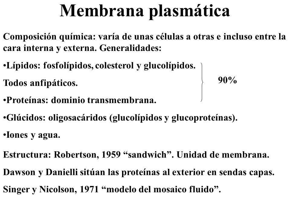 Membrana plasmática Composición química: varía de unas células a otras e incluso entre la cara interna y externa. Generalidades: