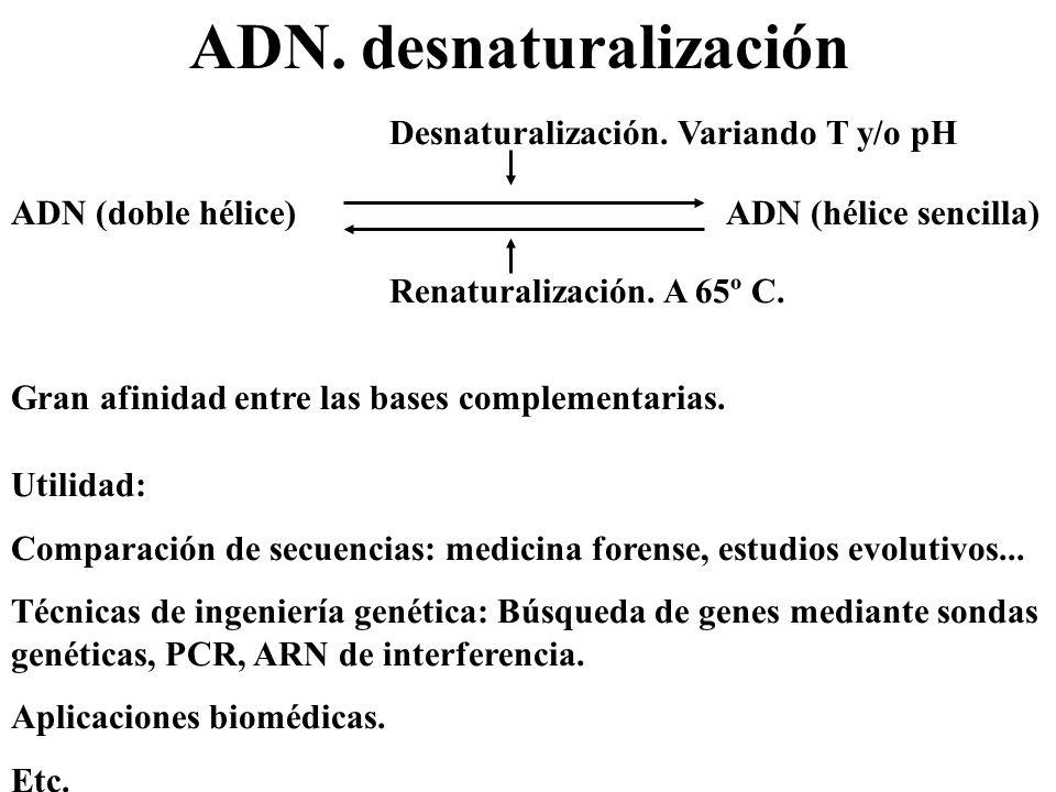 ADN. desnaturalización