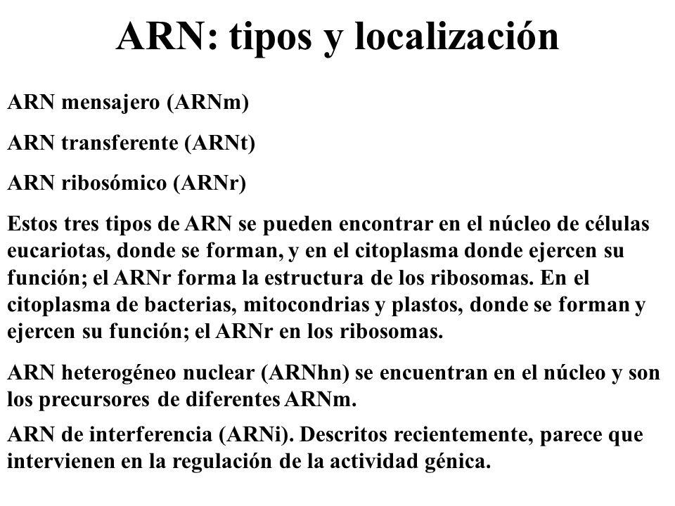 ARN: tipos y localización