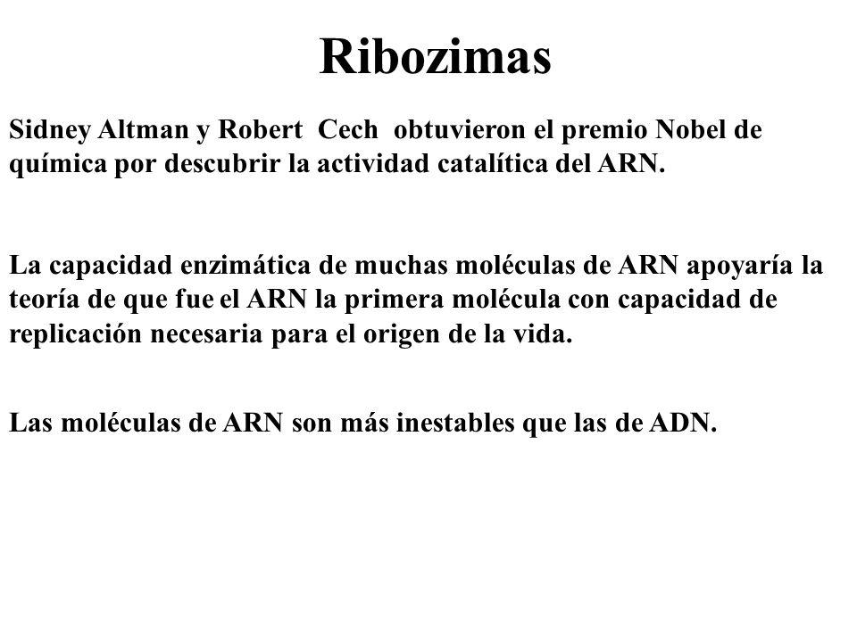 Ribozimas Sidney Altman y Robert Cech obtuvieron el premio Nobel de química por descubrir la actividad catalítica del ARN.