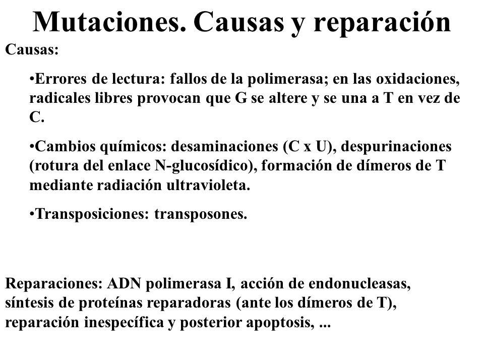 Mutaciones. Causas y reparación