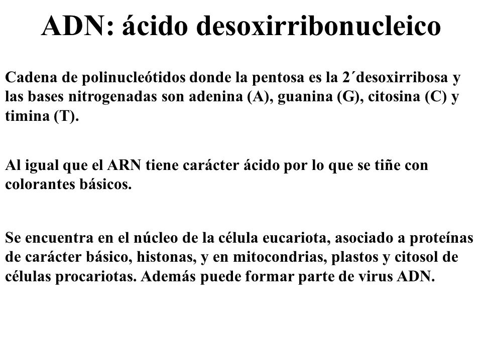ADN: ácido desoxirribonucleico