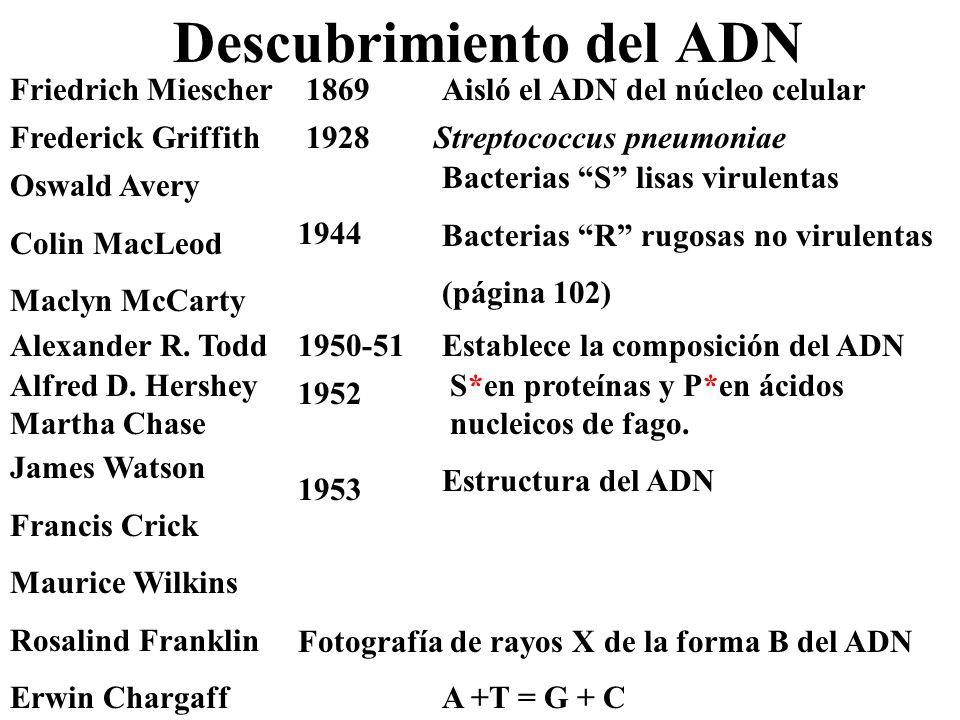 Descubrimiento del ADN