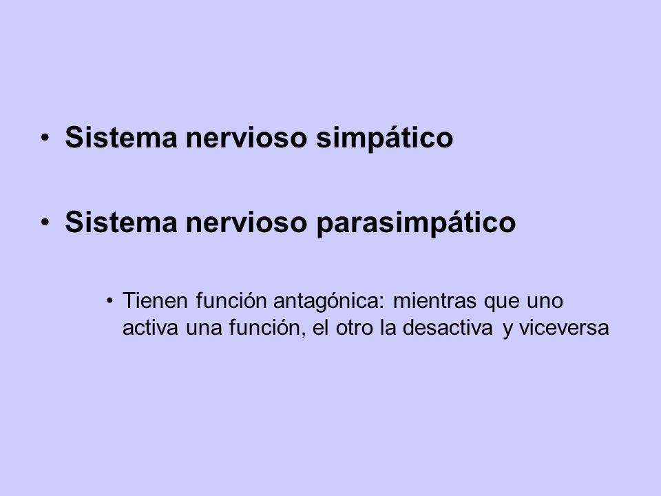 Sistema nervioso simpático Sistema nervioso parasimpático