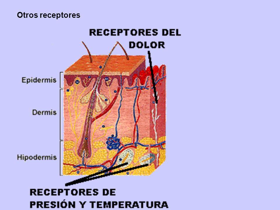 Otros receptores