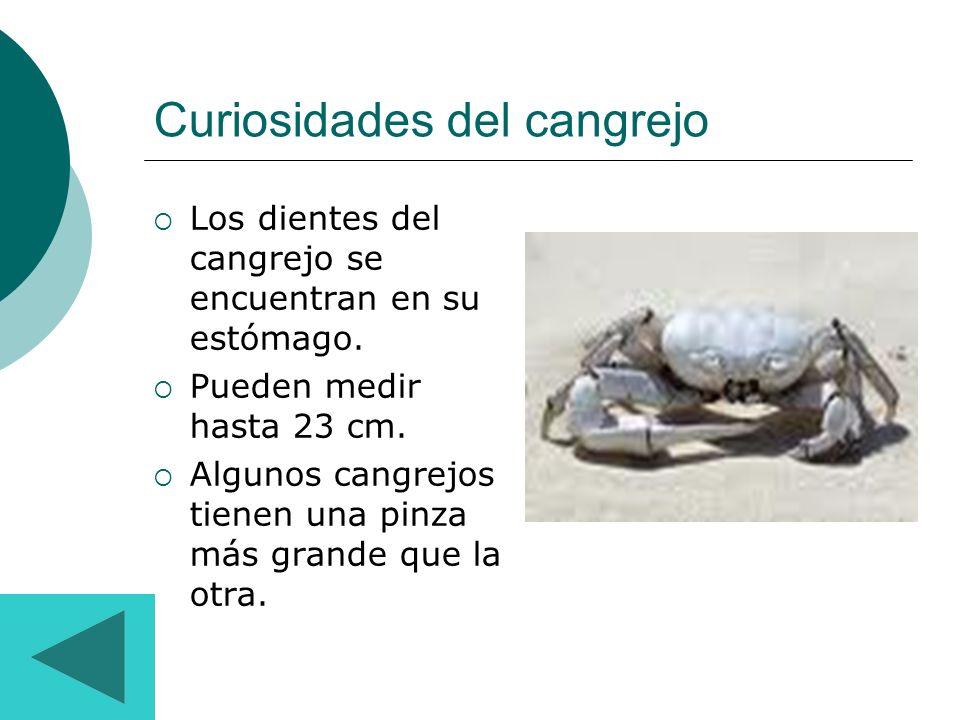 Curiosidades del cangrejo