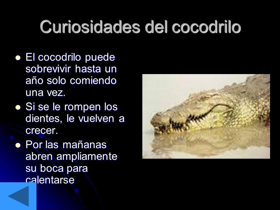 Curiosidades del cocodrilo