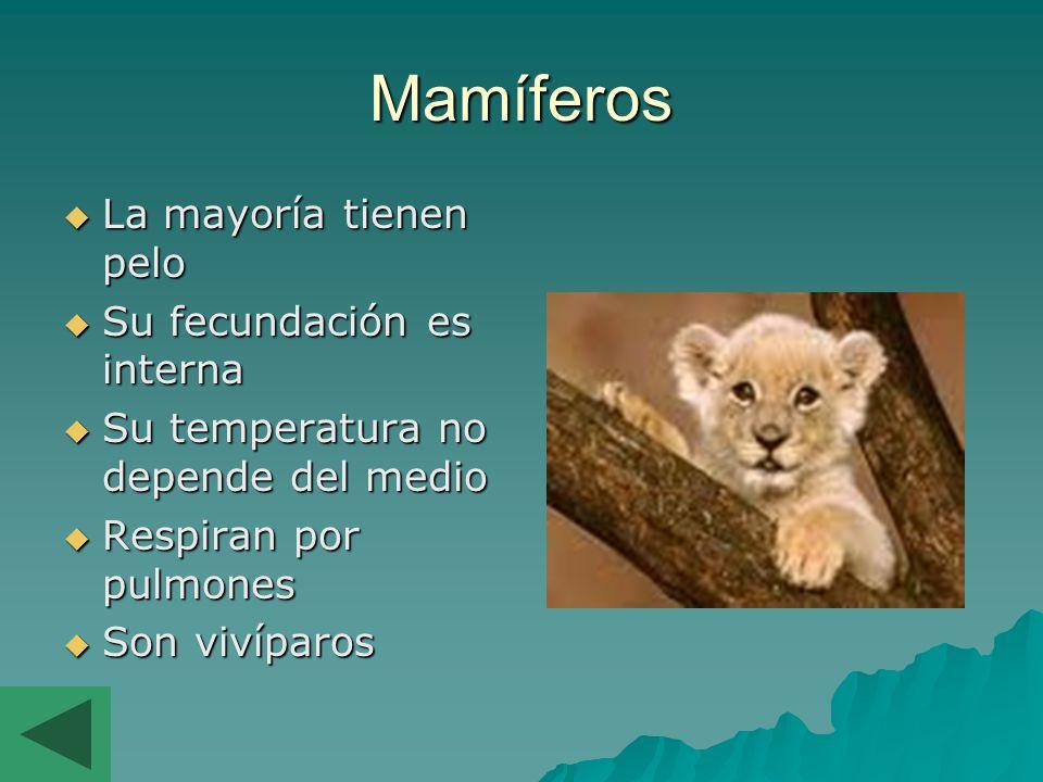 Mamíferos La mayoría tienen pelo Su fecundación es interna