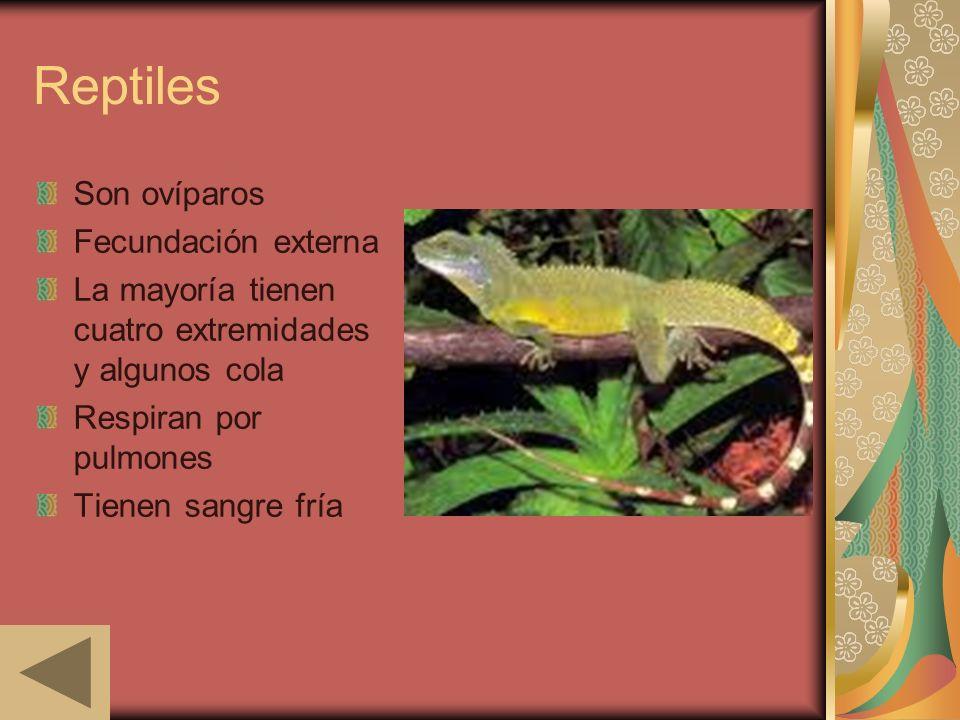 Reptiles Son ovíparos Fecundación externa