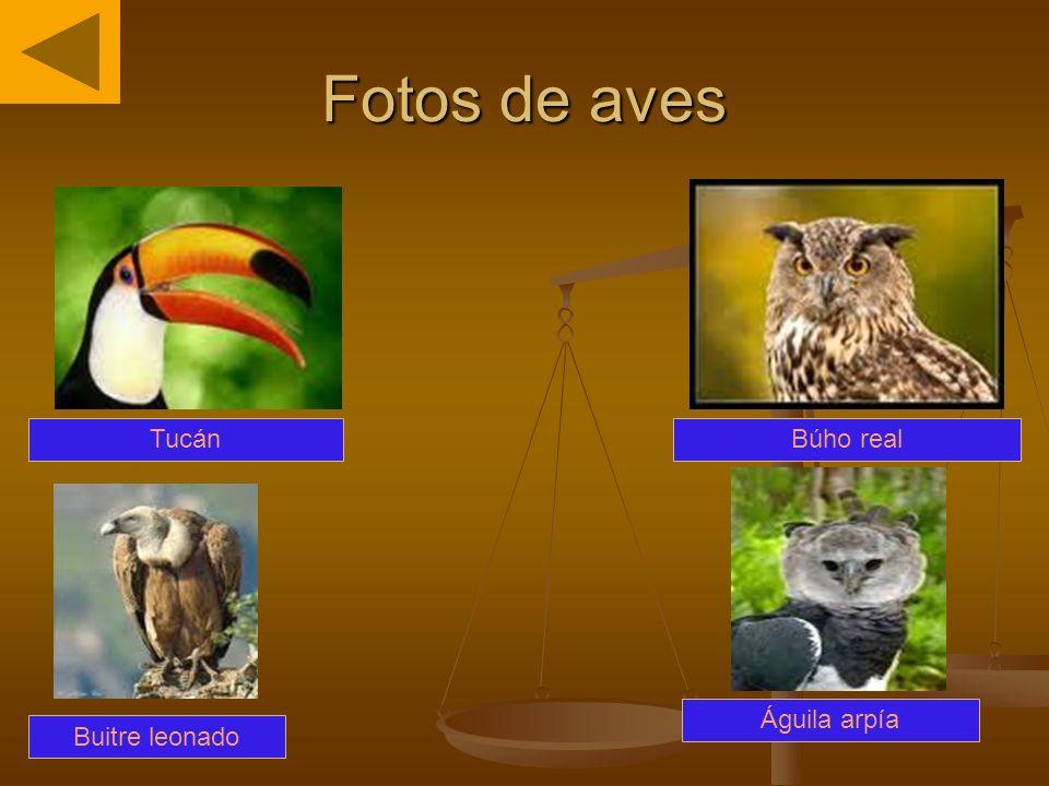 Fotos de aves Tucán Búho real Águila arpía Buitre leonado