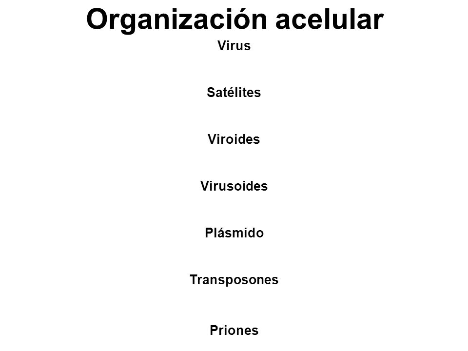 Organización acelular