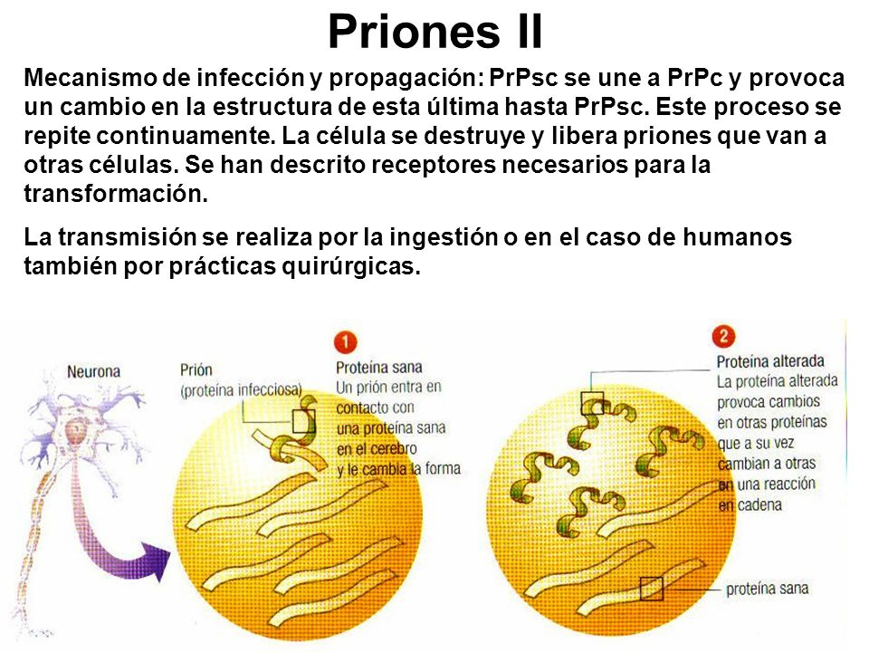 Priones II