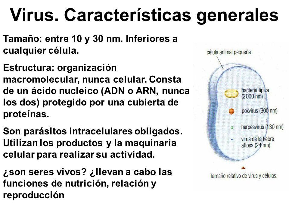 Virus. Características generales