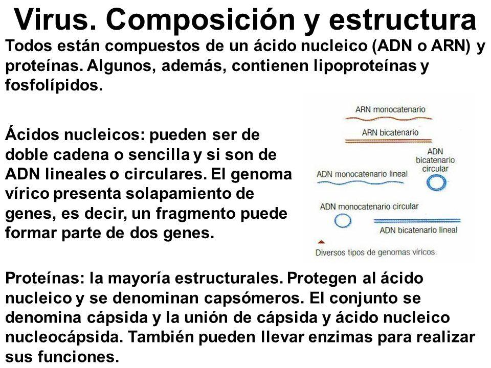 Virus. Composición y estructura