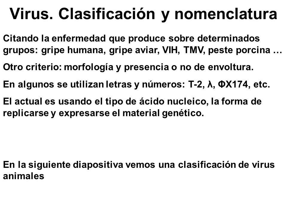 Virus. Clasificación y nomenclatura