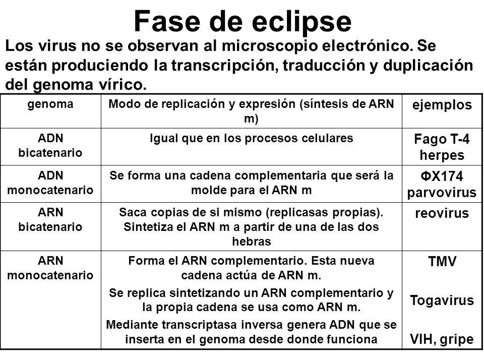 Fase de eclipse