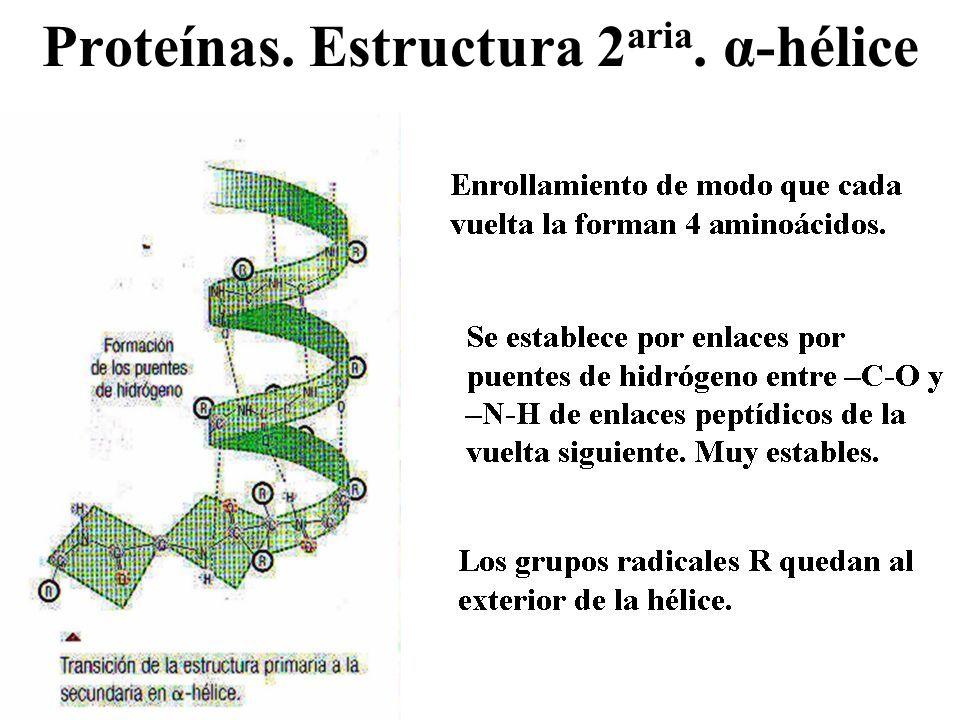 Proteínas. Estructura 2aria. α-hélice
