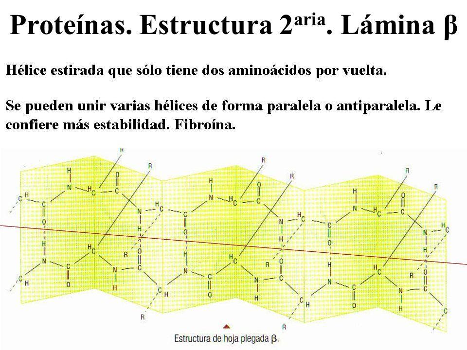 Proteínas. Estructura 2aria. Lámina β