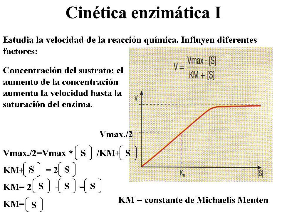 Cinética enzimática I