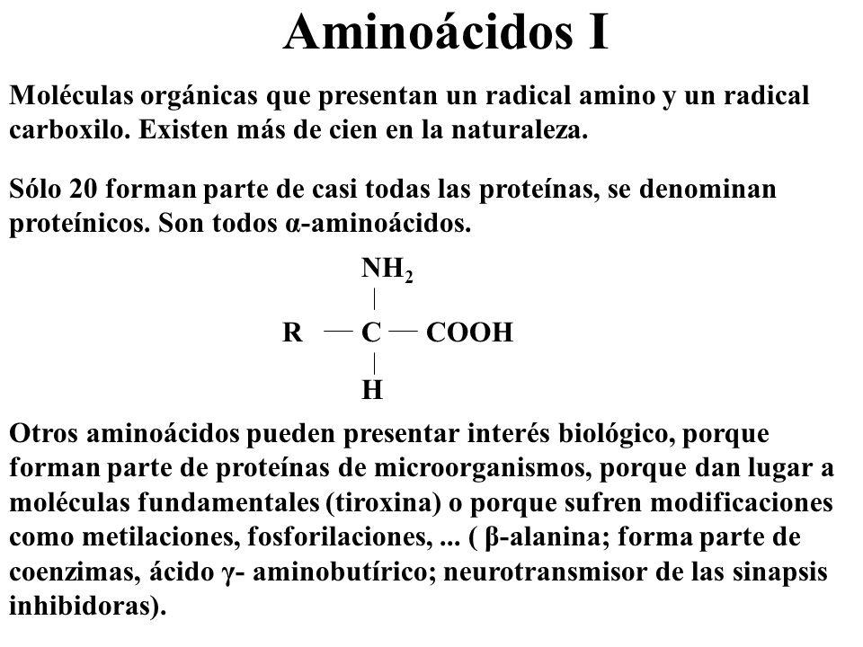 Aminoácidos I Moléculas orgánicas que presentan un radical amino y un radical carboxilo. Existen más de cien en la naturaleza.