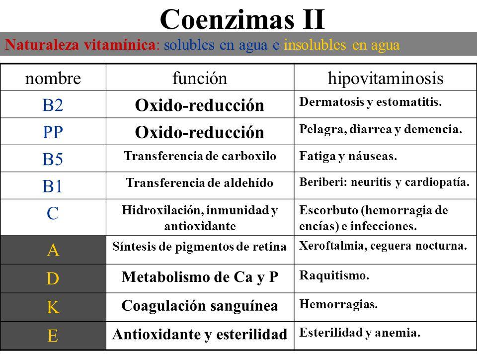 Coenzimas II nombre función hipovitaminosis B2 Oxido-reducción PP B5