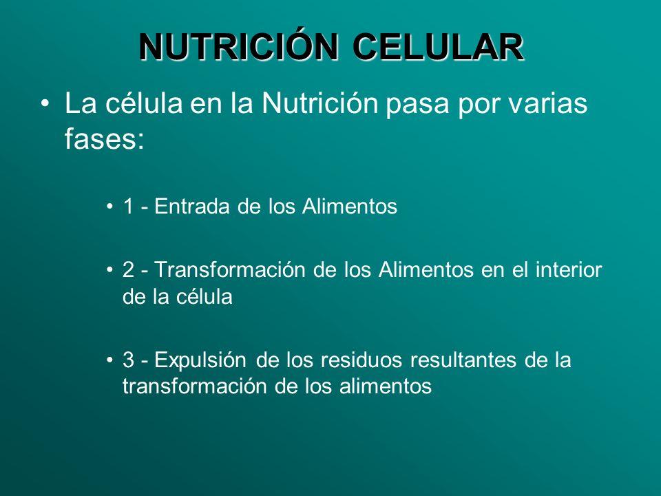 NUTRICIÓN CELULAR La célula en la Nutrición pasa por varias fases: