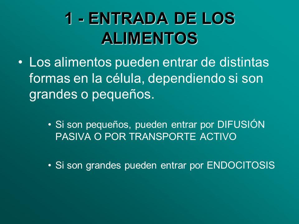 1 - ENTRADA DE LOS ALIMENTOS