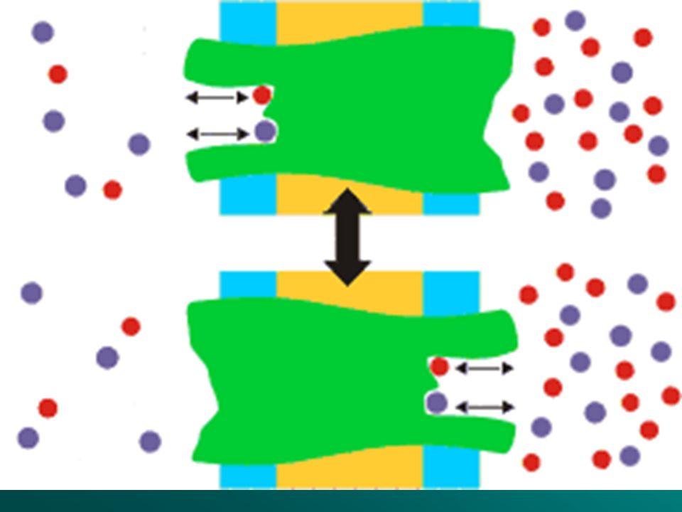 TRANSPORTE ACTIVO Se produce cuando el alimento es de pequeño tamaño, pero es escaso en el medio. La célula tiene que gastar energía en su entrada.