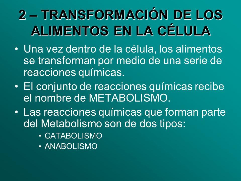 2 – TRANSFORMACIÓN DE LOS ALIMENTOS EN LA CÉLULA