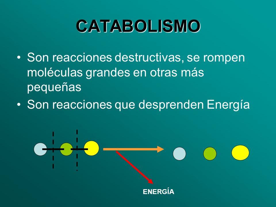 CATABOLISMO Son reacciones destructivas, se rompen moléculas grandes en otras más pequeñas. Son reacciones que desprenden Energía.