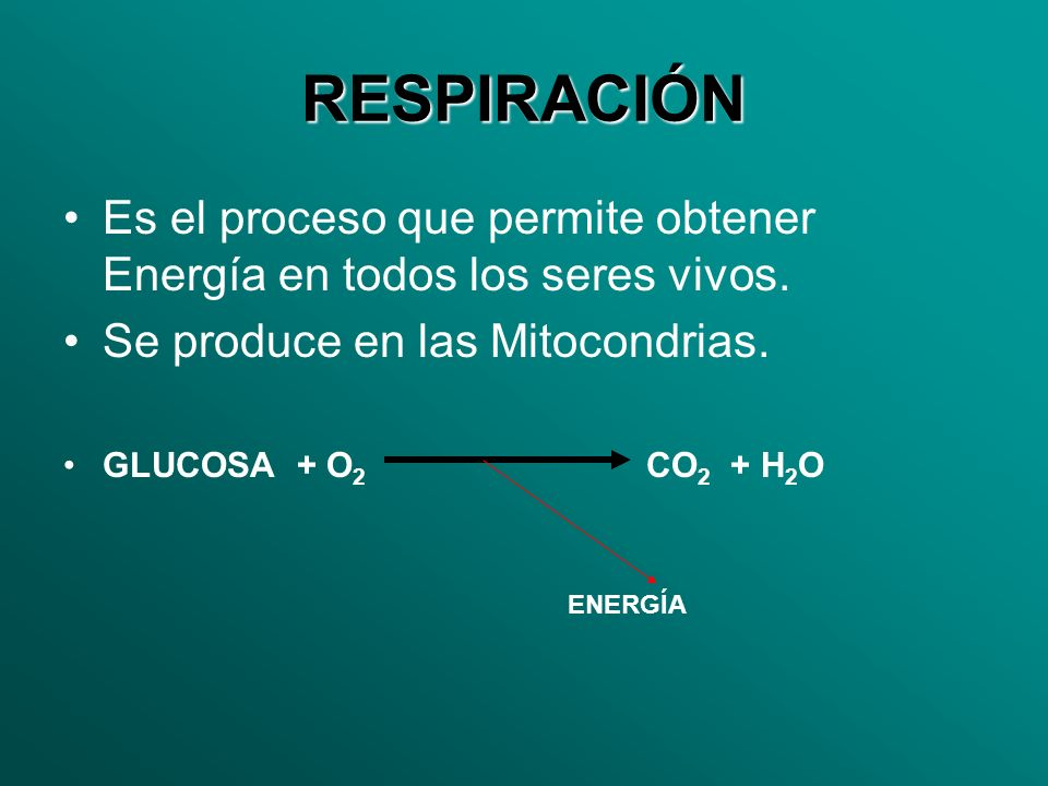 RESPIRACIÓN Es el proceso que permite obtener Energía en todos los seres vivos. Se produce en las Mitocondrias.