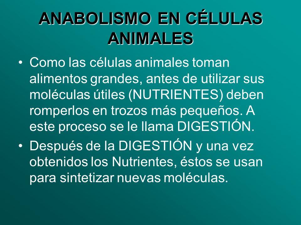 ANABOLISMO EN CÉLULAS ANIMALES