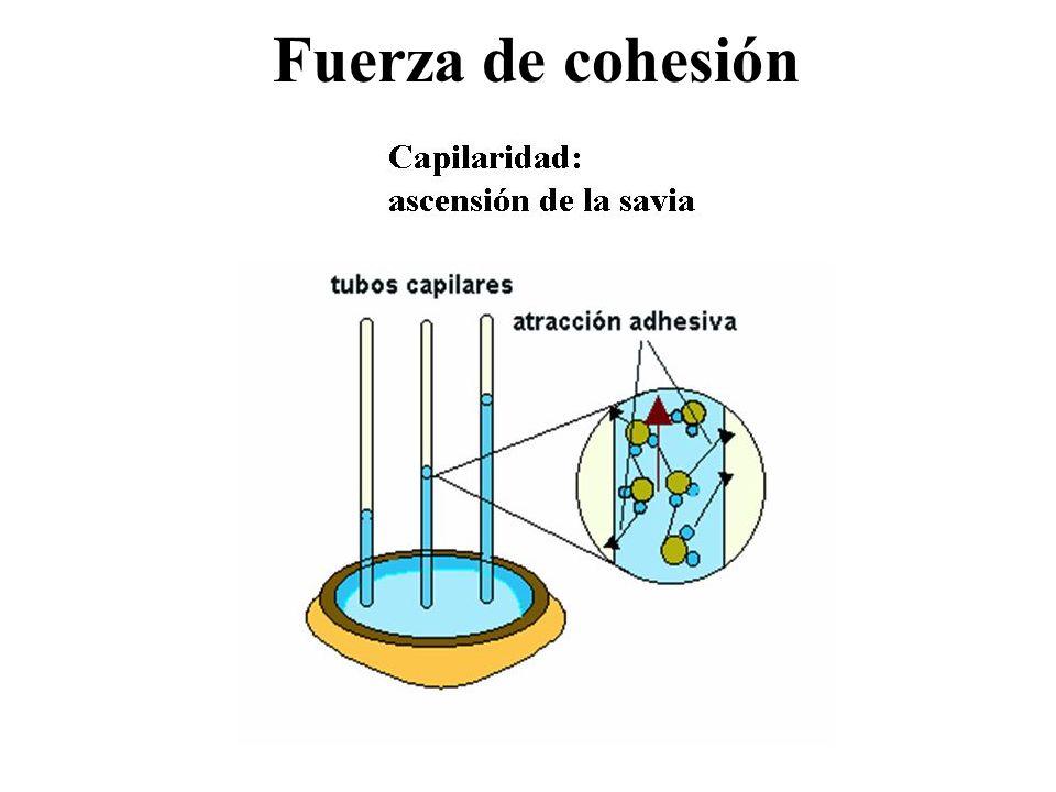 Fuerza de cohesión