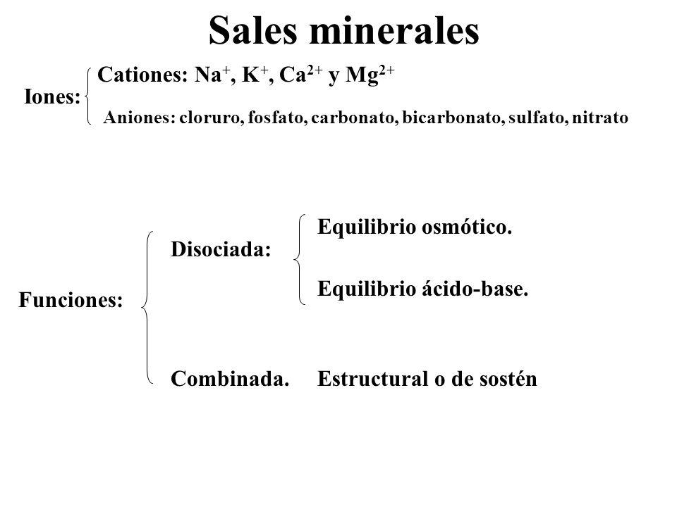Sales minerales Iones: Cationes: Na+, K+, Ca2+ y Mg2+ Funciones: