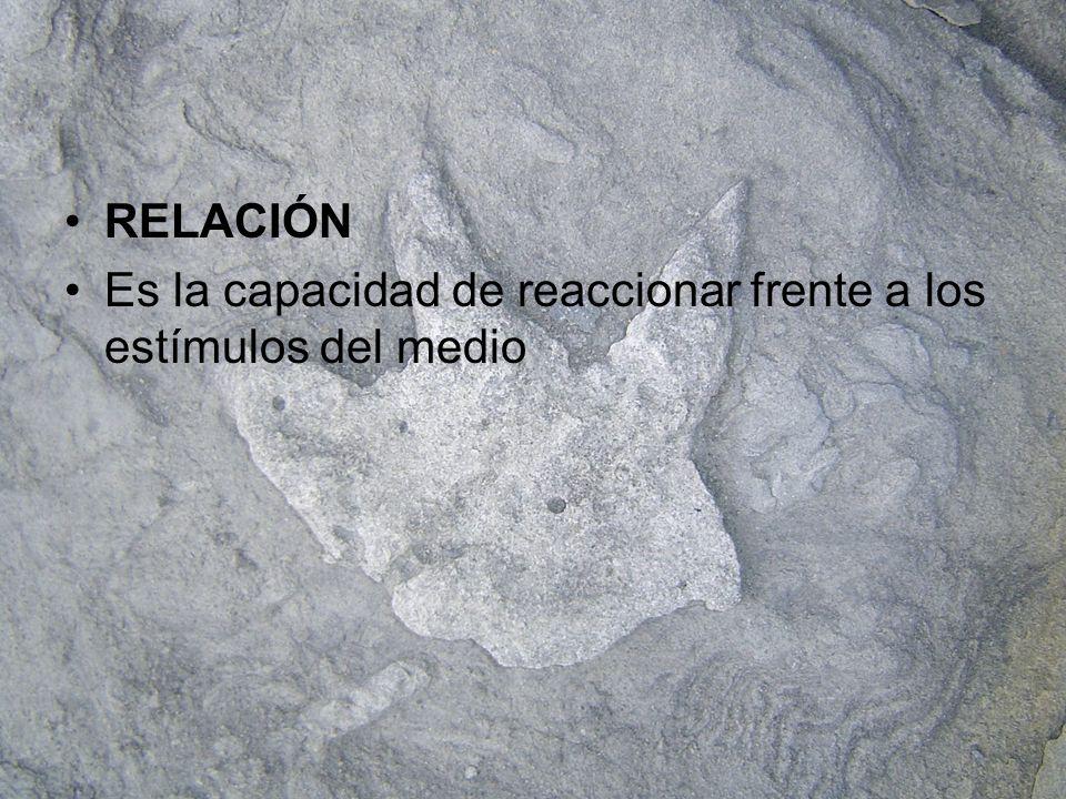 RELACIÓN Es la capacidad de reaccionar frente a los estímulos del medio